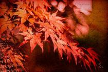 Herbst im Farbenrausch von fraudoktor