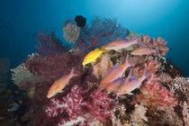Reef Life by Reinhard Dirscherl