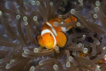 Nemo by Reinhard Dirscherl