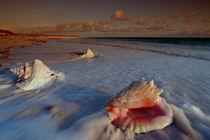 Muscheln am Strand by Reinhard Dirscherl