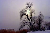 Winterzeit by Cornelia Greinke