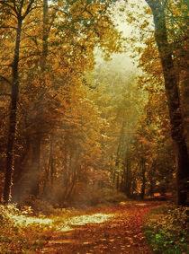 Herbst im Schloßpark von Bernhard Kosten