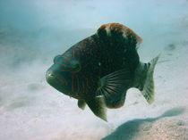 Fisch im Roten Meer by niehauto