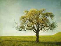 Appletree von Priska Wettstein