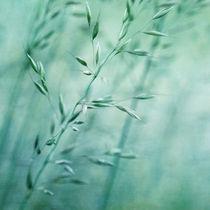 Grassland von Priska Wettstein