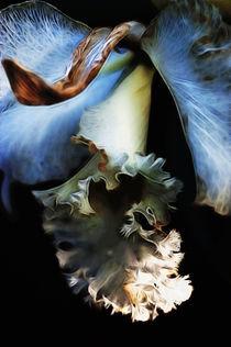 Verblühte Schönheit by pahit
