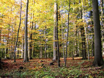 Es ist Herbst by Anja Abel