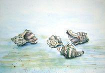 Muscheln von philomena