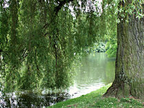 Mein Freund der Baum von Sven Wentzke