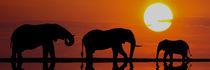 UNTER DER SONNE AFRIKAS von Heiko Lehmann