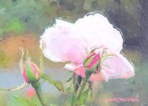 Rose mit Knospen by Udo Schiffgen