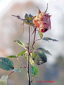 Rose im Herbst von Udo Schiffgen