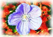 Blaue Blüte by Udo Schiffgen