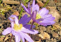 Erste Blüten by Udo Schiffgen