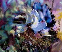 Pflanzenkosmos by Scheuer Alois