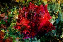 Gedanken eines Rosenzüchters by Scheuer Alois