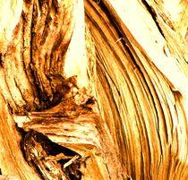 Anschmiegsames Holz by Christa Raatz