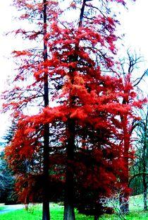 Die sichtbare Energie in dem Baum by Christa Raatz