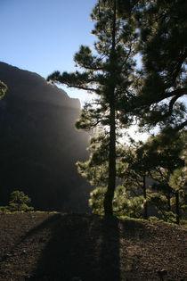 Baum im Gegenlicht in Isla de La Palma 2008 by Harald Wosihnoj