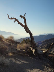einsamer abgestorbener Baum in der Küstenlandschaft von Südkalifornien von Willy Matheisl