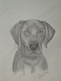 Labrador Paddy aus London by Cornelia Kalfuß