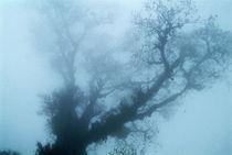 nebelbaum by ralf werner froelich