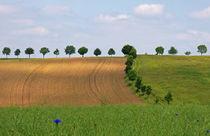 Landschaftsarchitektur by spiritofnature