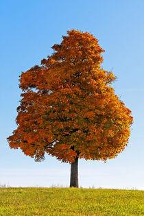 Golden Tree by spiritofnature