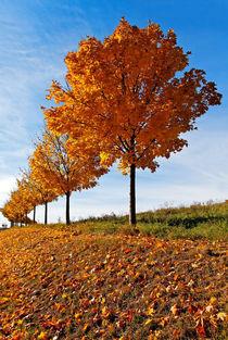 Wenn die Blätter fallen by spiritofnature