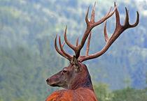 König der Wälder