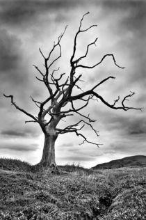 The dead tree by Sebastian Wuttke