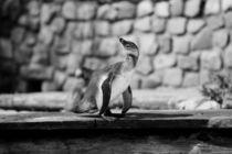 Pinguin von KleinerKnipser
