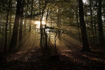 Morgen im Wald von Martin Kretschmar