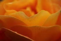 orange von Martin Kretschmar