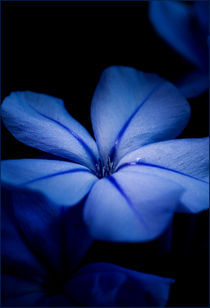 Blue by Martina Raab