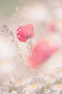 Dreaming by Martina Raab