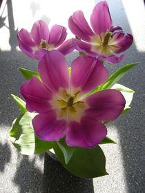 Tulpen 01 by Miriam Hoffmann