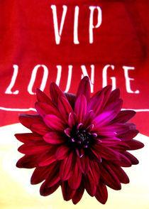 VIP LOUNGE by Miriam Hoffmann
