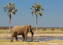 Elefant am Wasserloch zwischen Palmen by Markus Ulrich