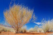 Gelber Strauch in der Wüste von Markus Ulrich