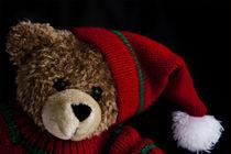 Teddy by Brigitte Jach