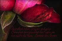 Zeichen der Liebe by Brigitte Jach