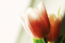 Tulpen am Fenster by Brigitte Jach