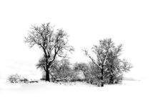 Wintermärchen by Heidi Brausch
