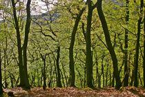 Binger Wald by rheo