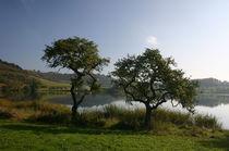 Zwei Bäume am Maar von rheo
