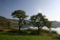 Zwei Bäume am Maar by rheo