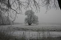 Eisige Stille by rheo