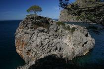 Die Pinie auf dem Felsen by rheo