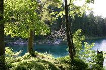 Waldlicht by rheo